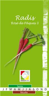 Rosa-Rettich-Samen  3 oder 5 Wochen Rose 3