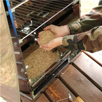 Geräucherte lauwarme Austern