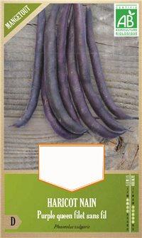 Bohnensamen Purple Queen